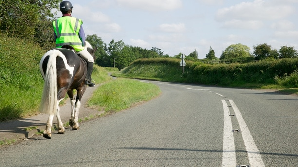 Horse rider on road