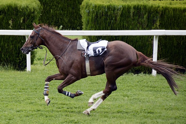 The Top 10 Most Successful Race Horses - Prime Stables